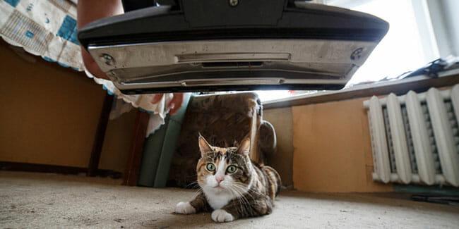How Often Should I pet Vacuum