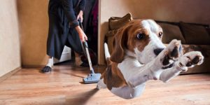 Common Pet Vacuum Buying Mistakes