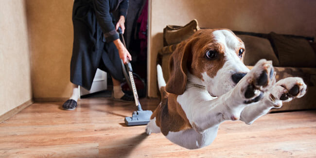 Common Pet Vacuum Buying Mistakes