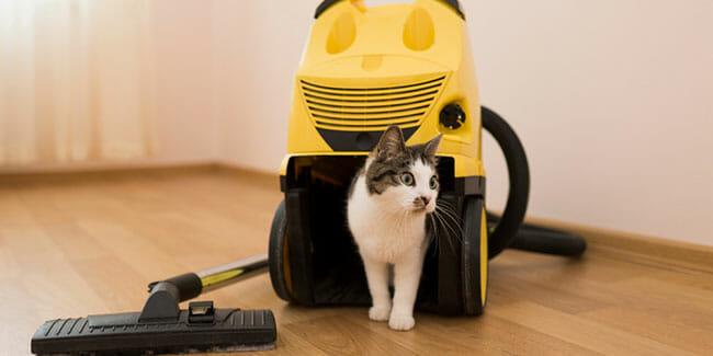 Regular Vs. Pet Vacuum Cleaners