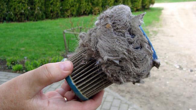 Maintain A Pet Vacuum