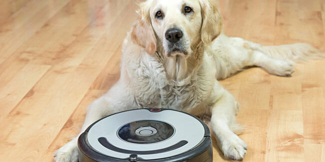 Pet Vacuums Remove Pet Odors